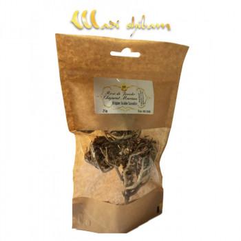Chajarat Mariam / Rose de Jericho - Arabie Saoudite - 25 gr - Wadi Shibam - 4776
